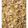 مرکز فروش سبوس برنج دامی باکیفیت در کشور در حال حاضر