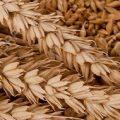 میزان قیمت خرید سبوس گندم با کیفیت تهران امسال چقدر است ؟