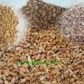 قیمت بهترین انواع سبوس گندم دامی امسال به چه صورت است ؟