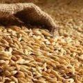قیمت خرید عمده انواع سبوس گندم باکیفیت تهران امروز چقدر است؟
