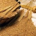 قیمت خرید عمده انواع سبوس گندم درجه یک کرج چقدر کاهش یافته است؟